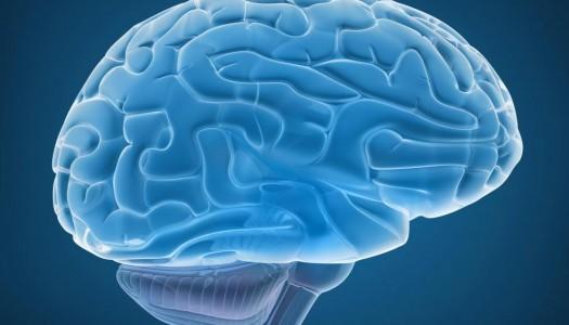 Pre-Frontal Cortex in Adolescents: Thinking with Jello