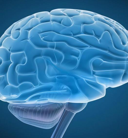 prefrontal cortex / wisegeek